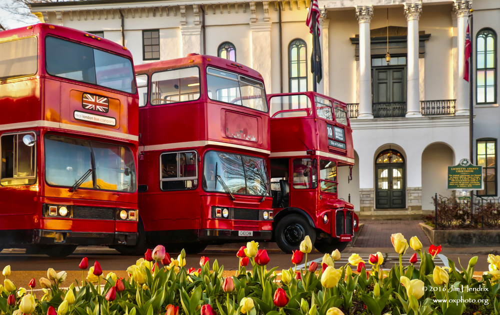 1125.7 - Double Deckers over Tulips